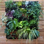 living wall detail