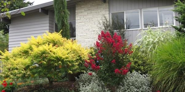 Tag Archives: seattle landscape design. Looking back at winter for spring  planning - Seattle Landscape Design Michael Muro
